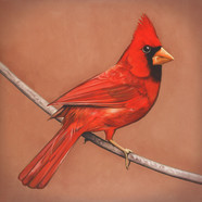 Alexisonfire - Old Crows / Young Cardinals
